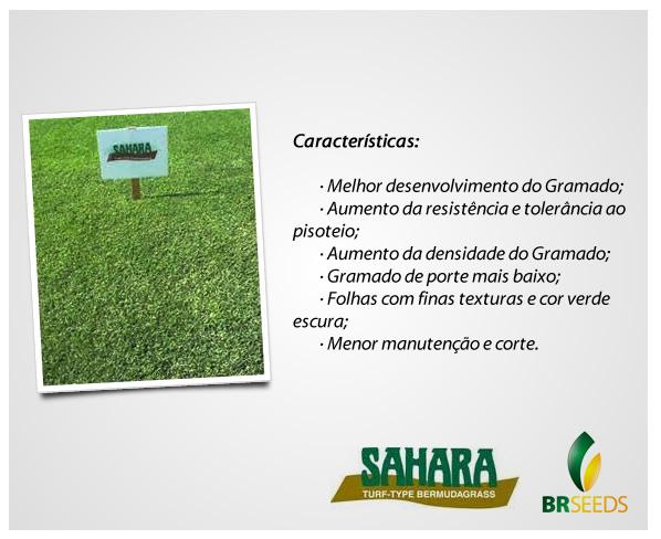 Sementes Grama Bermuda - Caixa com 500 gr (74%VC)