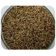 Sementes Grama Batatais - Caixa com 1,0 kg